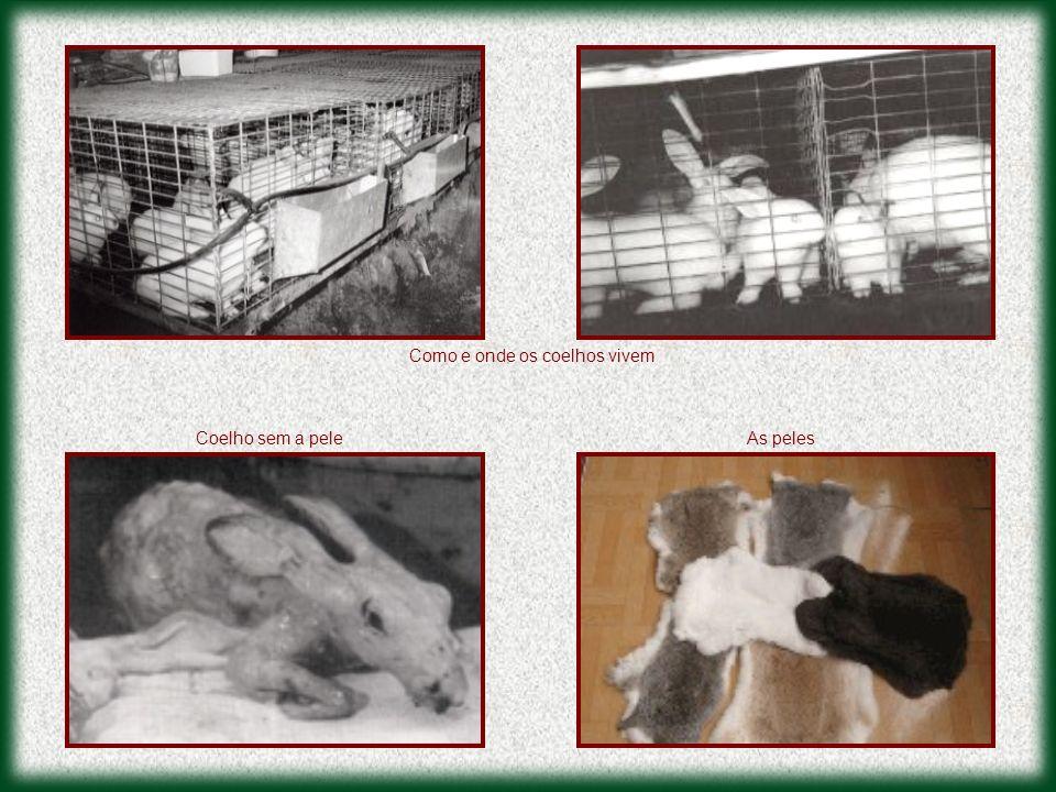 Como e onde os coelhos vivem