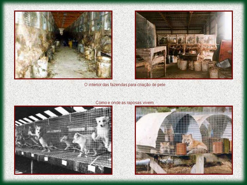 O interior das fazendas para criação de pele