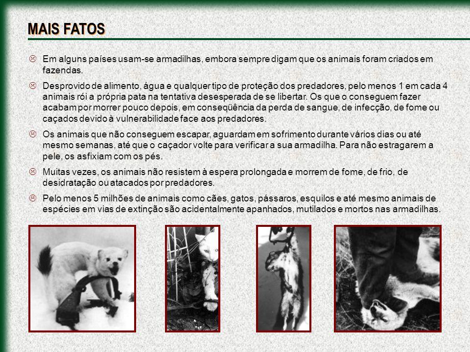 MAIS FATOS Em alguns países usam-se armadilhas, embora sempre digam que os animais foram criados em fazendas.
