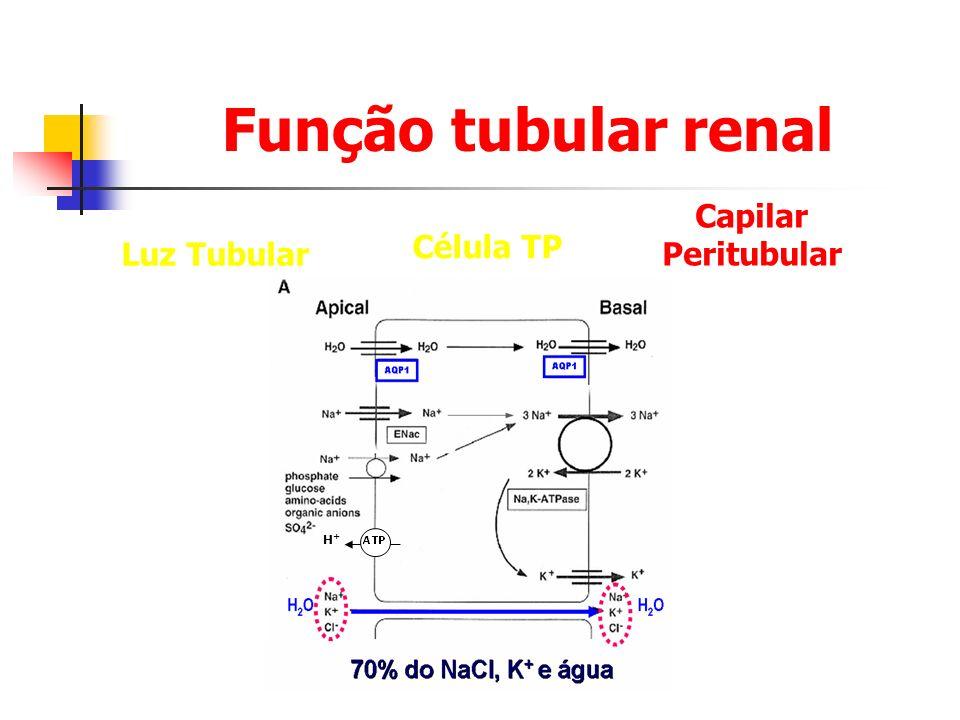 Função tubular renal Capilar Peritubular Célula TP Luz Tubular H+