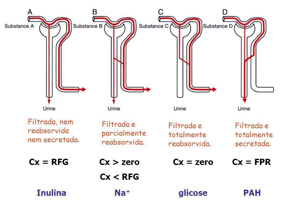 Cx < RFG Filtrada, nem reabsorvida nem secretada.