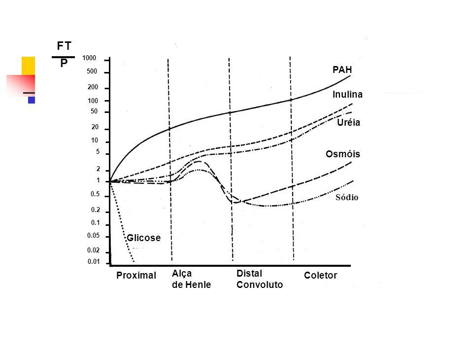 FT P Proximal Coletor Glicose PAH Inulina Uréia Osmóis Alça de Henle