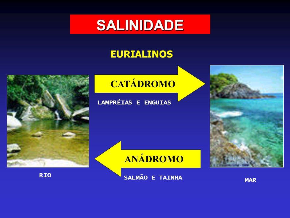 SALINIDADE EURIALINOS CATÁDROMO ANÁDROMO LAMPRÉIAS E ENGUIAS RIO