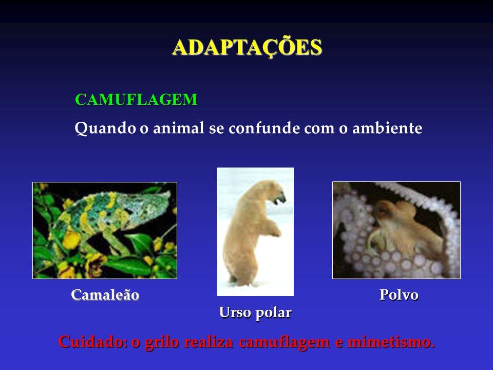 ADAPTAÇÕES CAMUFLAGEM Quando o animal se confunde com o ambiente