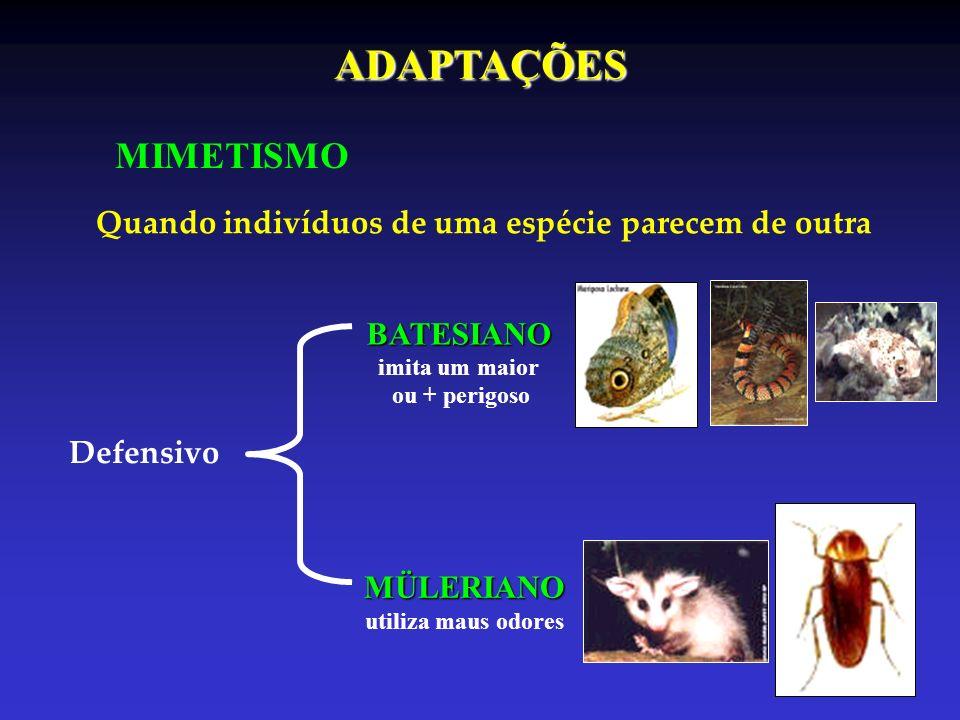ADAPTAÇÕES MIMETISMO Quando indivíduos de uma espécie parecem de outra