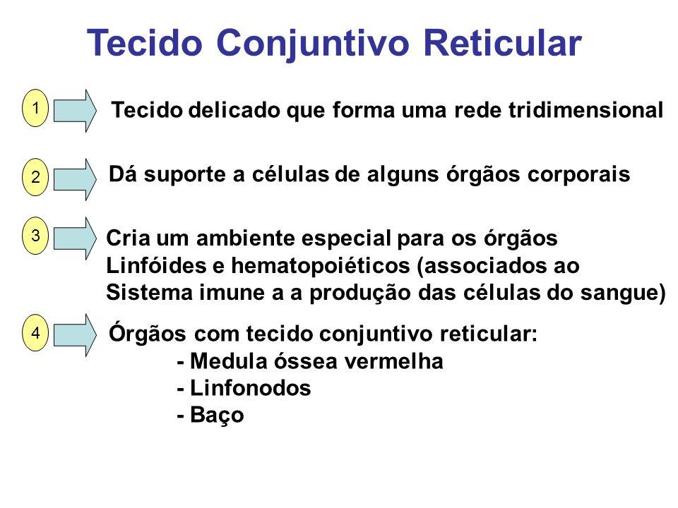 Tecido Conjuntivo Reticular