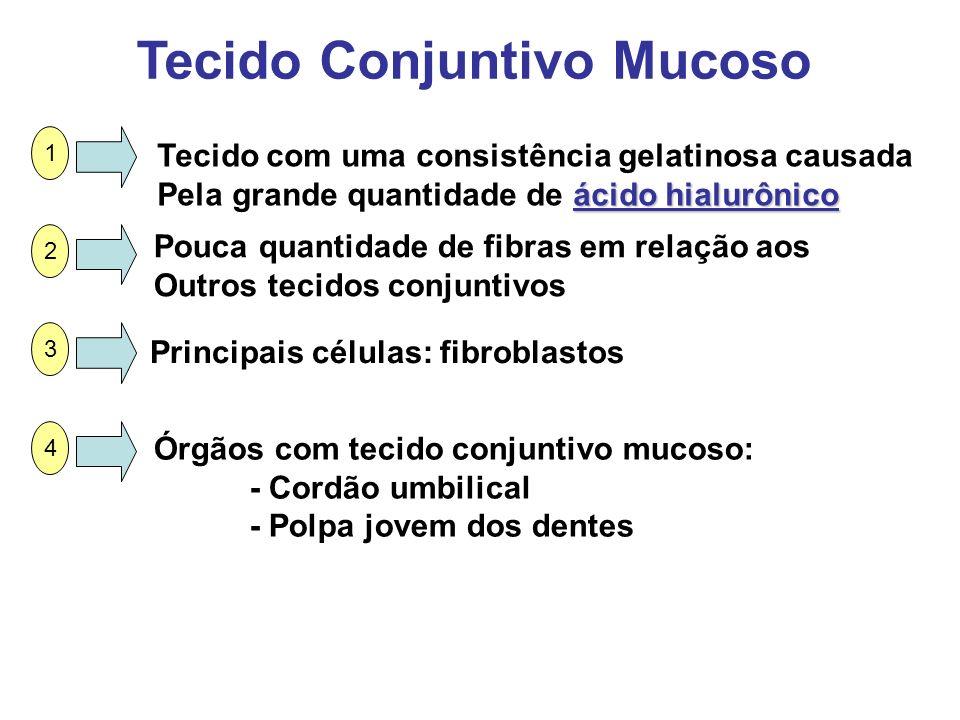 Tecido Conjuntivo Mucoso