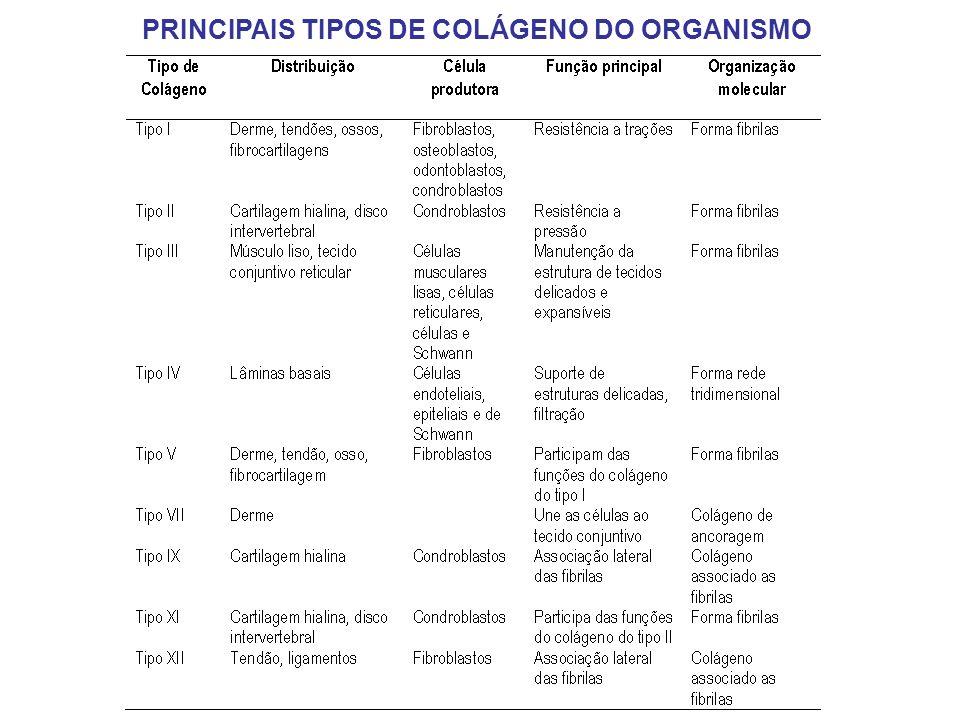PRINCIPAIS TIPOS DE COLÁGENO DO ORGANISMO