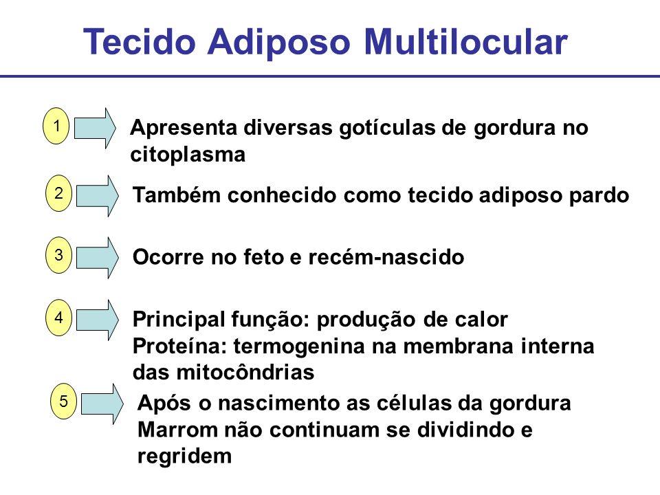 Tecido Adiposo Multilocular