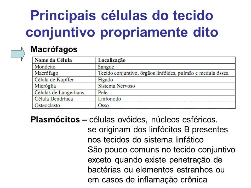 Principais células do tecido conjuntivo propriamente dito