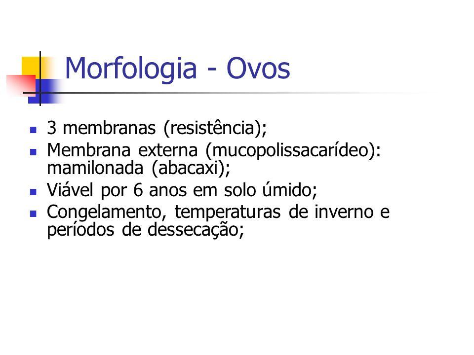 Morfologia - Ovos 3 membranas (resistência);