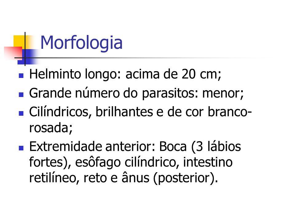Morfologia Helminto longo: acima de 20 cm;