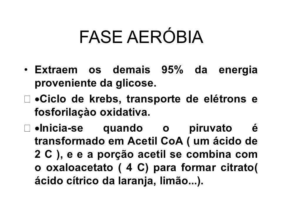 FASE AERÓBIA Extraem os demais 95% da energia proveniente da glicose.