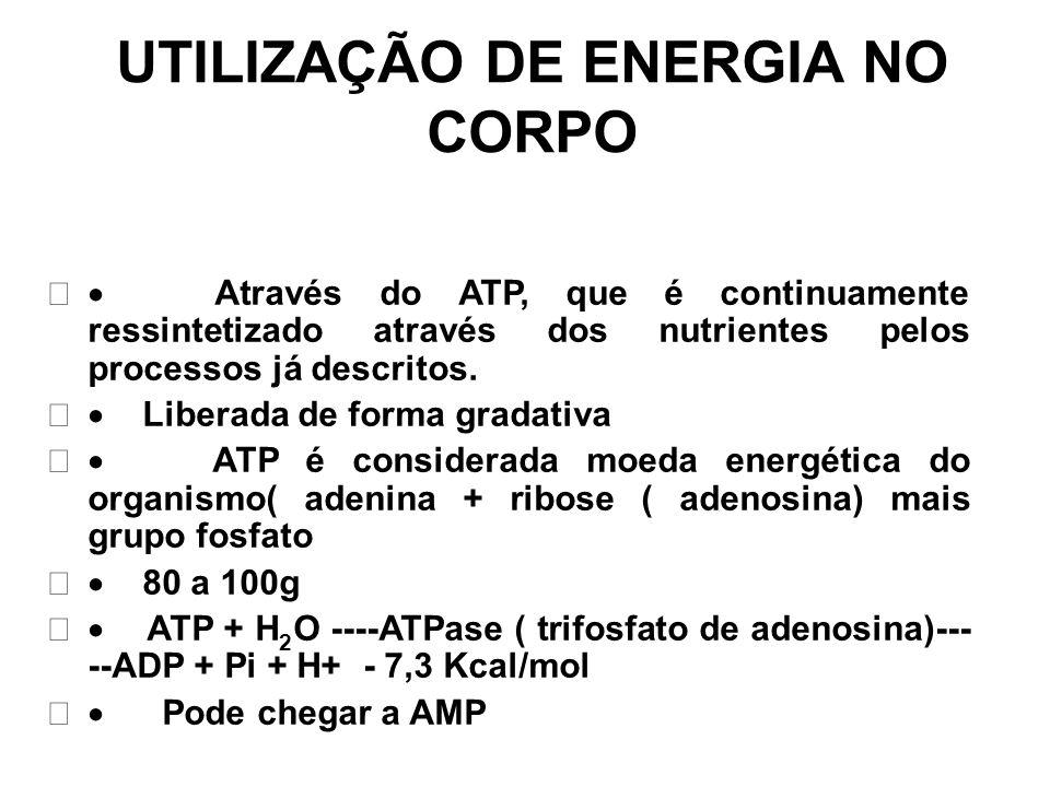 UTILIZAÇÃO DE ENERGIA NO CORPO