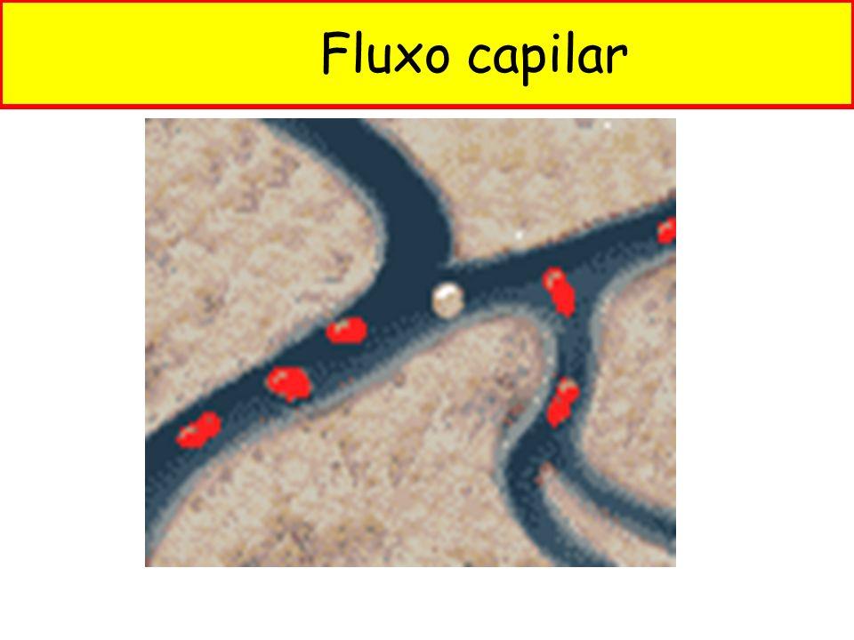 Fluxo capilar