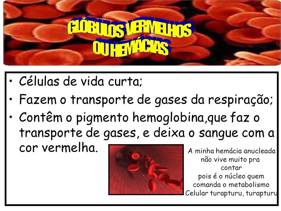 GLÓBULOS VERMELHOS OU HEMÁCIAS Células de vida curta;