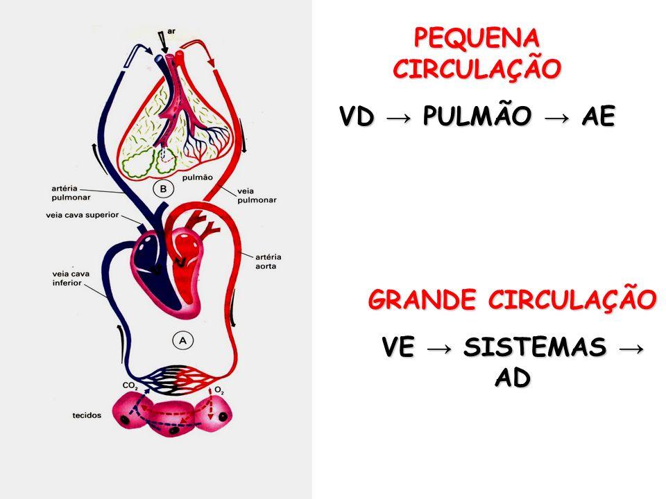PEQUENA CIRCULAÇÃO VD → PULMÃO → AE GRANDE CIRCULAÇÃO VE → SISTEMAS → AD