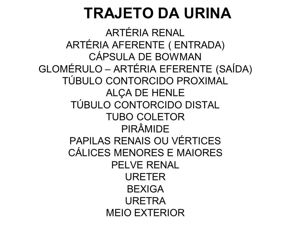 TRAJETO DA URINA ARTÉRIA RENAL ARTÉRIA AFERENTE ( ENTRADA)