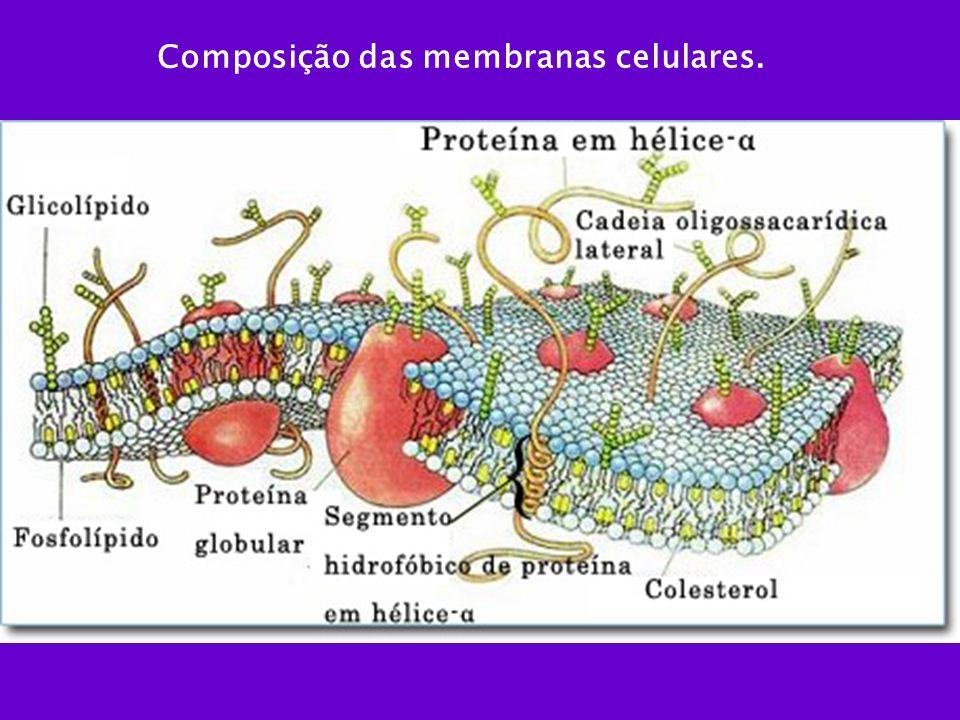 Composição das membranas celulares.