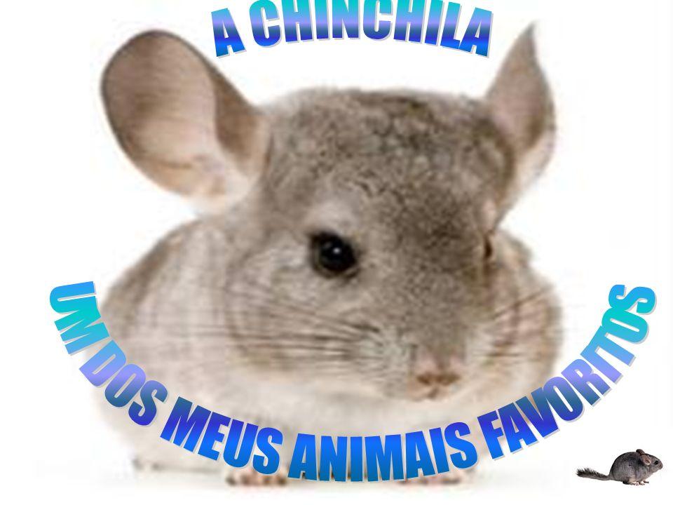 UM DOS MEUS ANIMAIS FAVORITOS