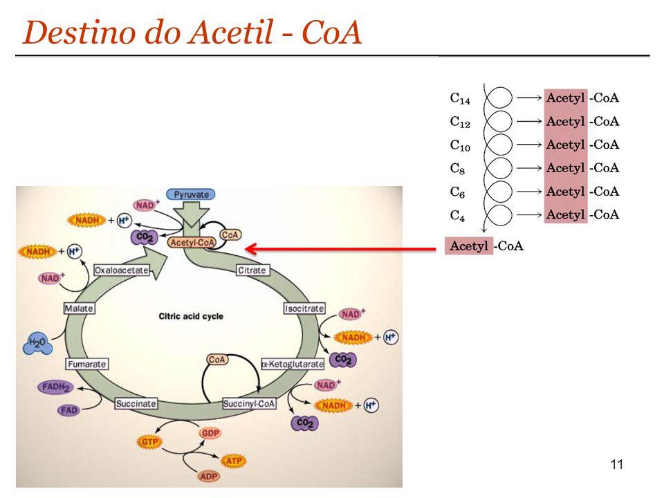 Destino do Acetil - CoA
