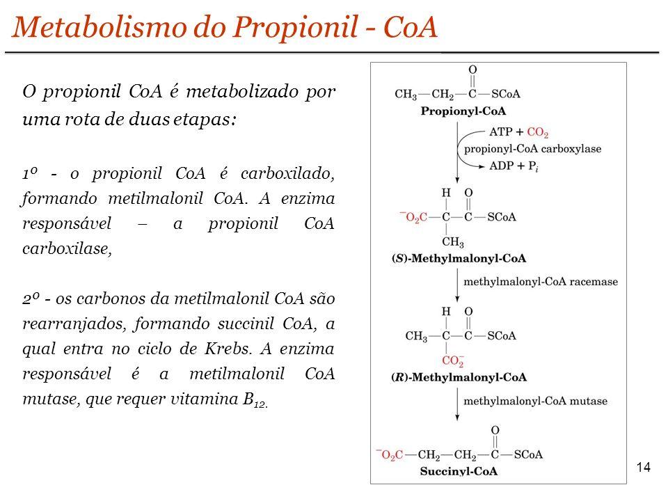 Metabolismo do Propionil - CoA