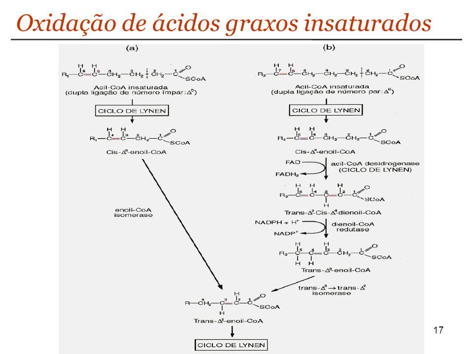 Oxidação de ácidos graxos insaturados
