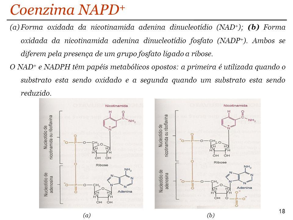 Coenzima NAPD+