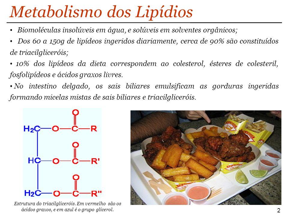 Metabolismo dos Lipídios