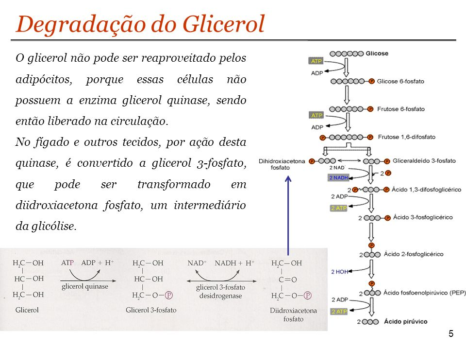 Degradação do Glicerol