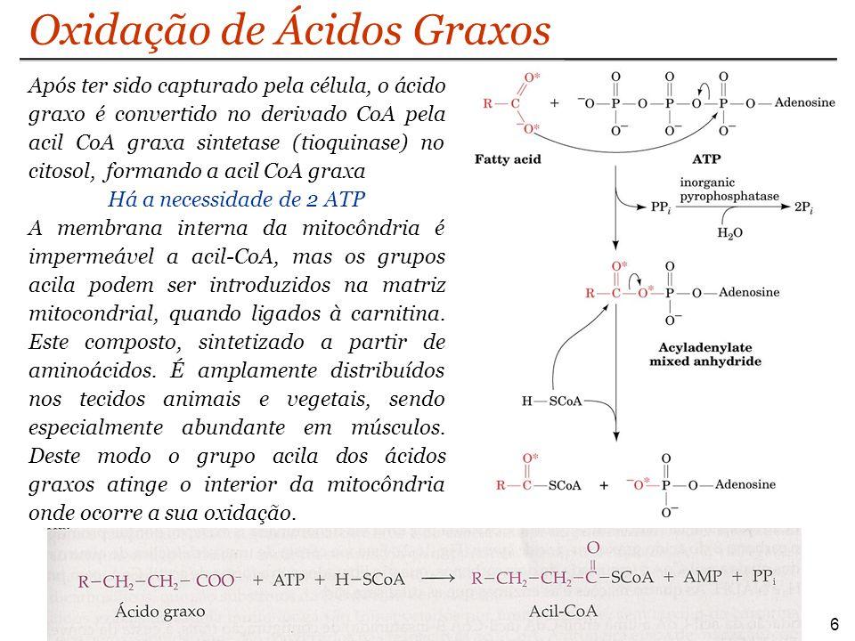 Oxidação de Ácidos Graxos