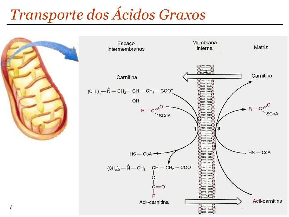 Transporte dos Ácidos Graxos