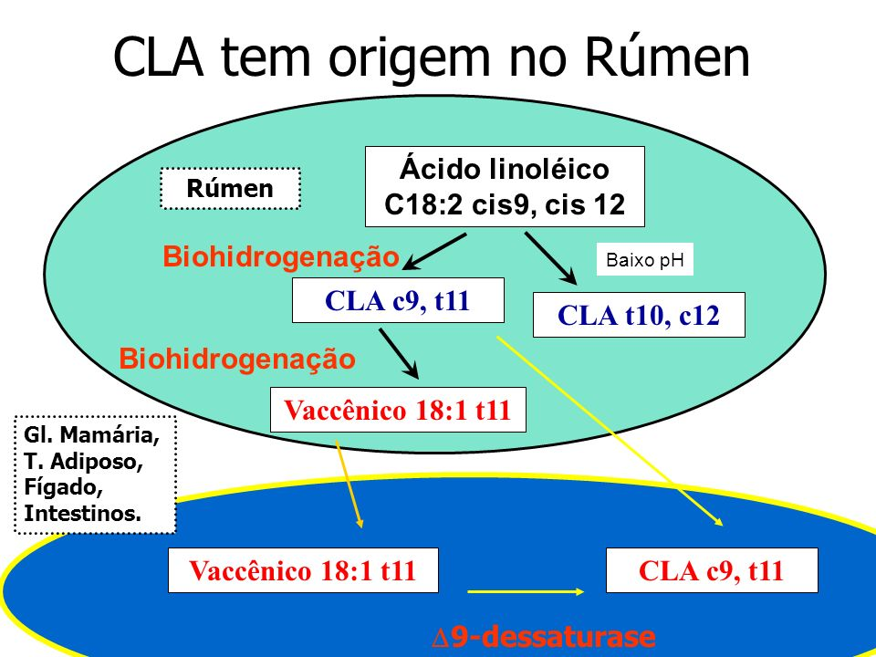 Ácido linoléico C18:2 cis9, cis 12
