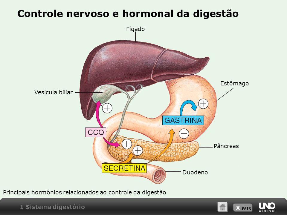 Controle nervoso e hormonal da digestão