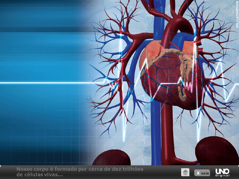Nosso corpo é formado por cerca de dez trilhões de células vivas...