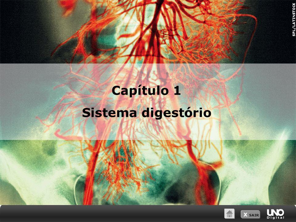 Capítulo 1 Sistema digestório