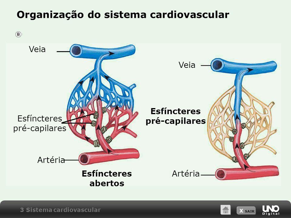 Esfíncteres pré-capilares