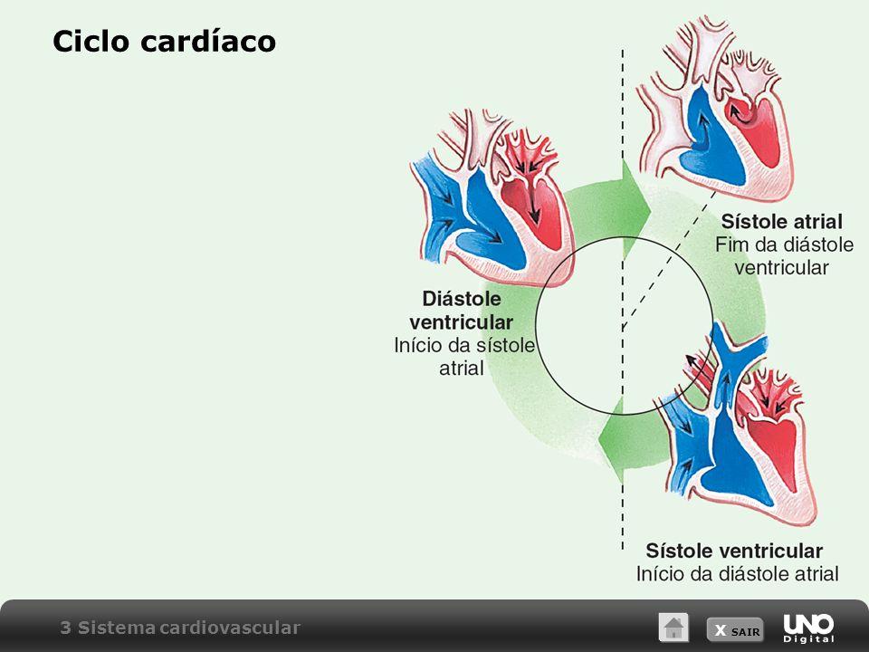 Ciclo cardíaco 3 Sistema cardiovascular