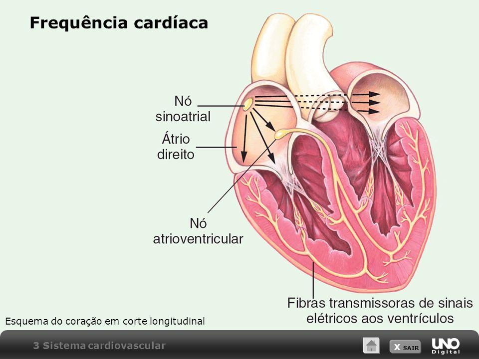 Frequência cardíaca Esquema do coração em corte longitudinal