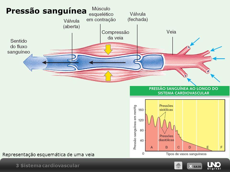 Pressão sanguínea Representação esquemática de uma veia