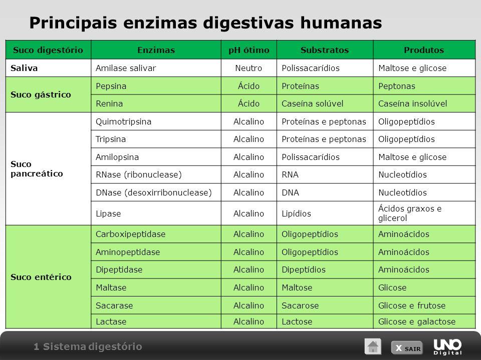 Principais enzimas digestivas humanas