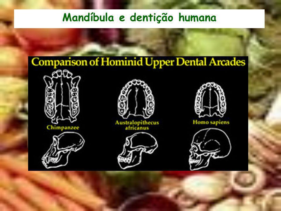 Mandíbula e dentição humana