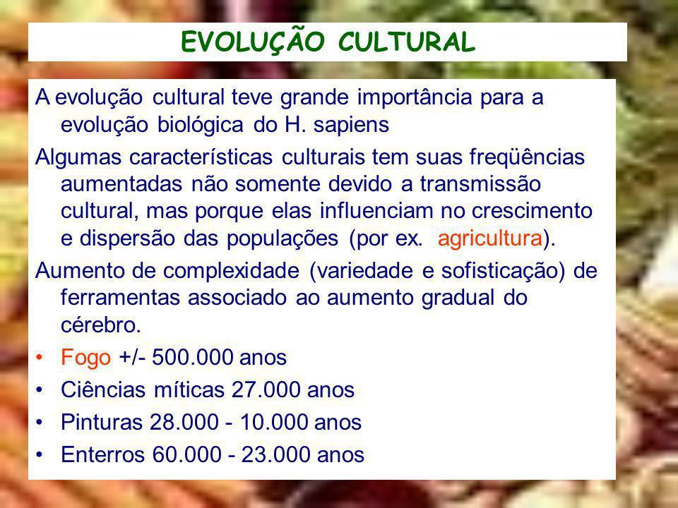 EVOLUÇÃO CULTURAL A evolução cultural teve grande importância para a evolução biológica do H. sapiens.