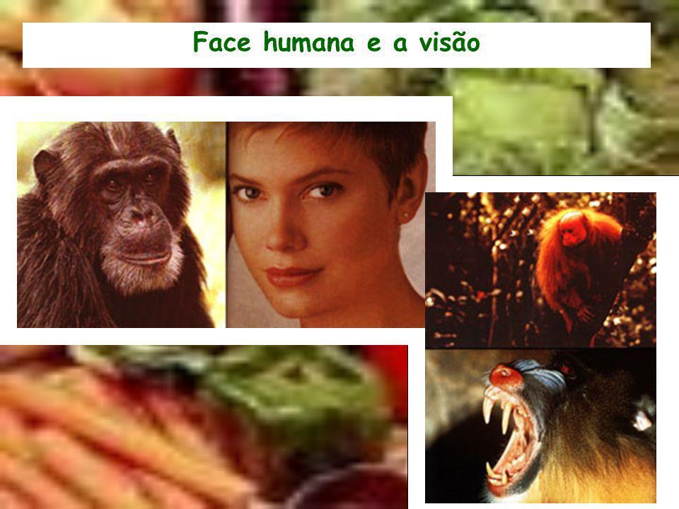 Face humana e a visão