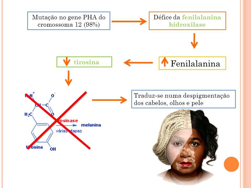 Fenilalanina Mutação no gene PHA do cromossoma 12 (98%)