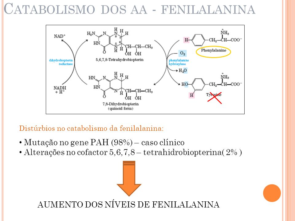 Catabolismo dos aa - fenilalanina