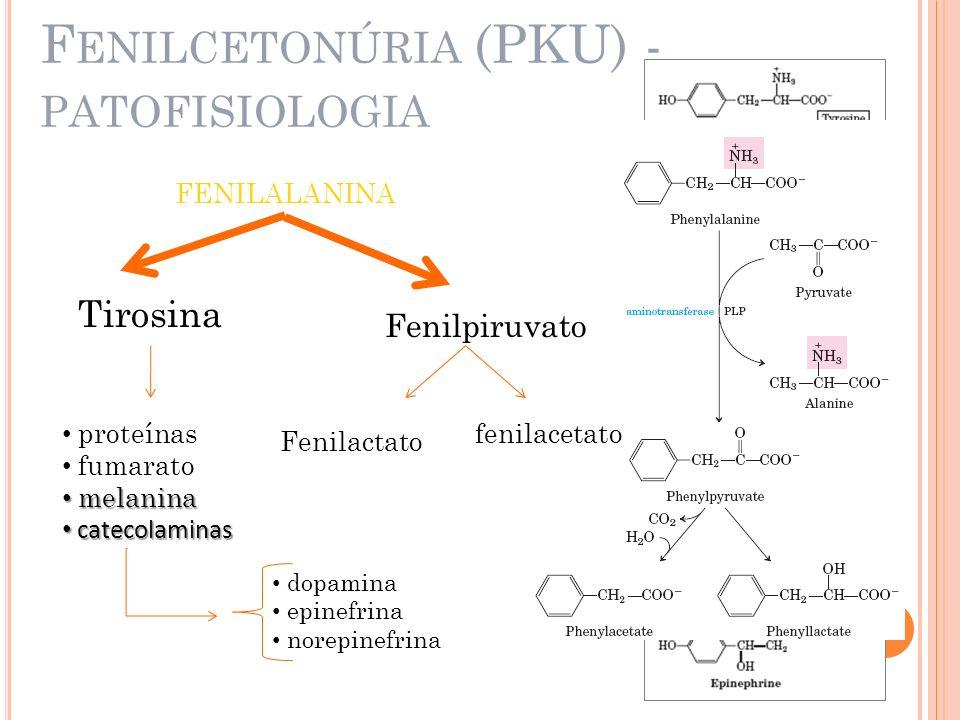 Fenilcetonúria (PKU) - patofisiologia