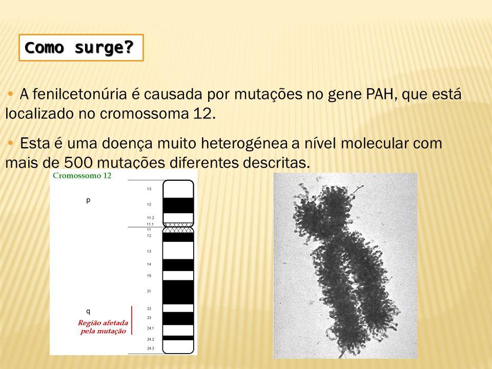 Como surge A fenilcetonúria é causada por mutações no gene PAH, que está localizado no cromossoma 12.