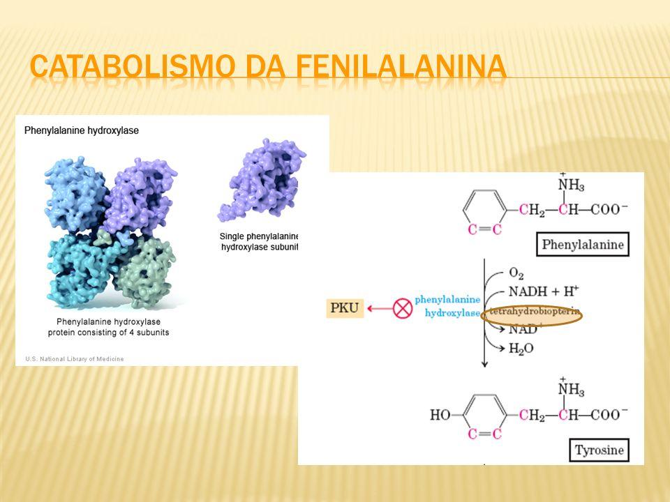 Catabolismo da fenilalanina