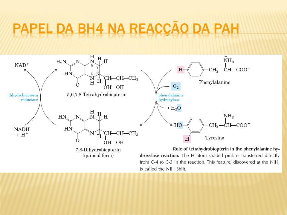 Papel da BH4 na reacção da PAH